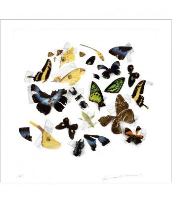 Édition - Natures Mortes #1856 - 2009